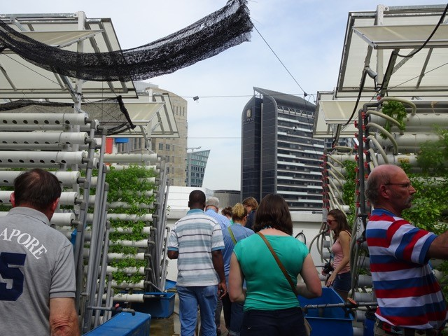 roof-top-farm-2