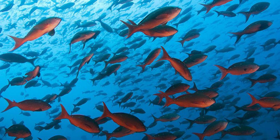 landscape-1449582432-fish